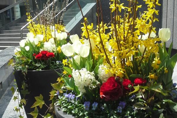 Add ons -Spring (1)
